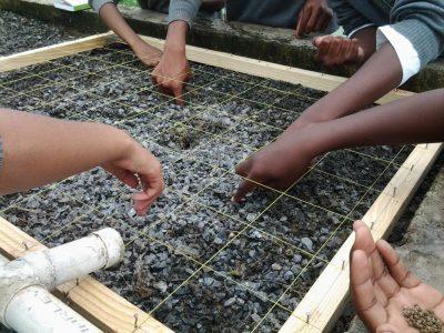 CDW-Planting-Lesson-(2)