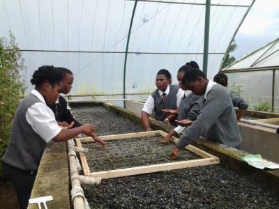 CDW-Planting-Lesson-(4)