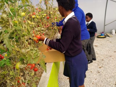 IMG_20170811_112916-Eastern-CapeSeyisi-Primary-School-Harvest