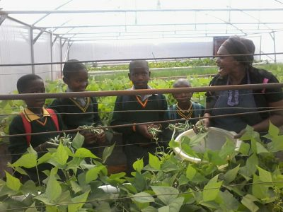 Learners-harvesting-beans-Randvaal-2016