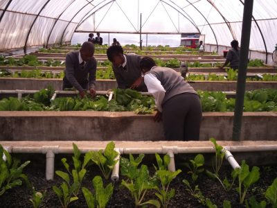 Learners-taking-care-of-their-vegetables-in-the-Aquaponics-unit-Kempton-ParkPics-For-LKP-LaunchCarel-De-Wet-System