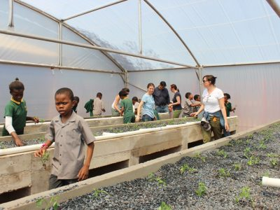 Learning-to-plant-in-aquaponics