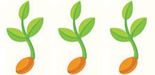 Seedling-Three
